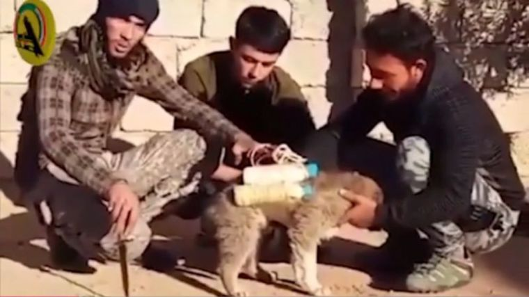 ISIS puppy