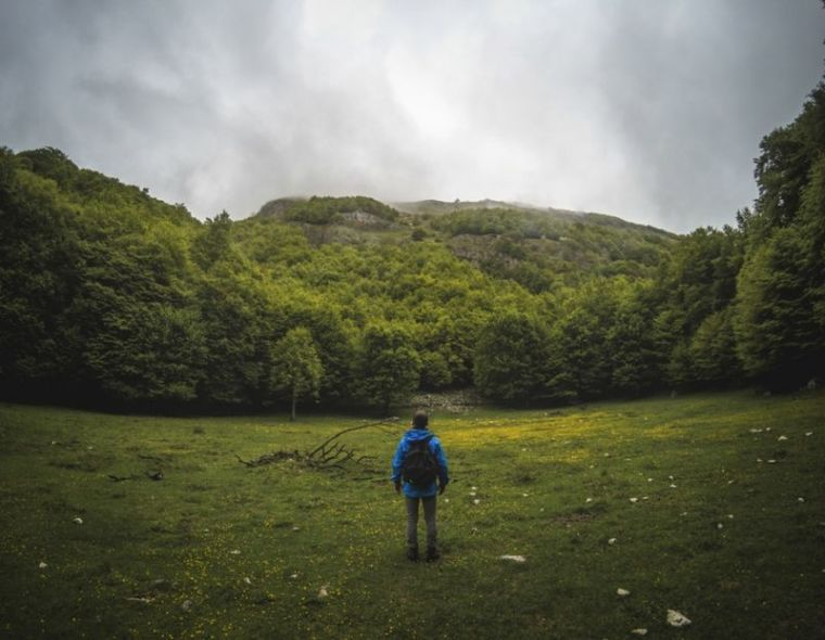 person, man, landscape, trees, forest, woods