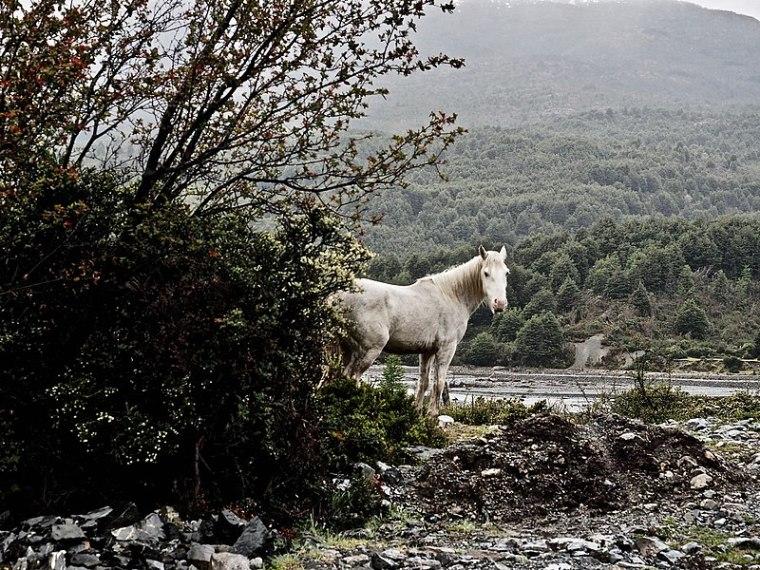 ancient horse