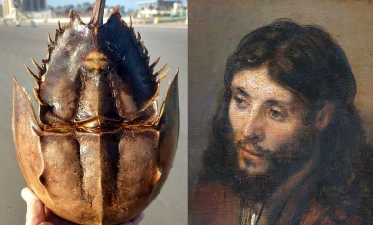 Jesus Crab, Rembrandt