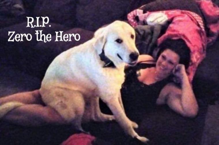 Zero the Hero Dog