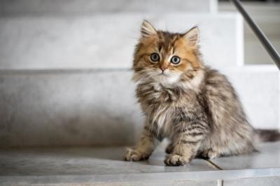 cat, pet, kitten