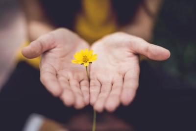 forgive, flower