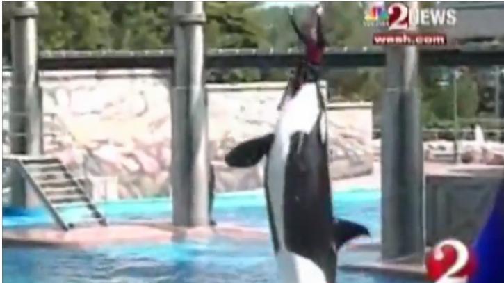 Blackfish Documentary: SeaWorld Says Film 'Inaccurately