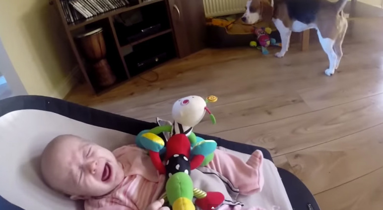 Charlie the beagle and baby