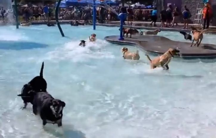 Before This Pool Closes To The Public, They Open It for Dogs