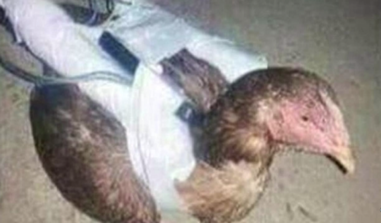 ISIS suicide chicken