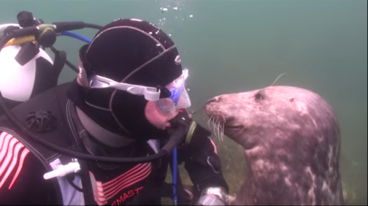 This Goofy Seal Is All About Belly Rubs