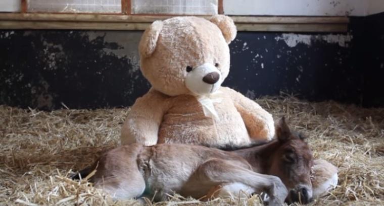 Orphan Pony Finds Friendship With A Teddy Bear