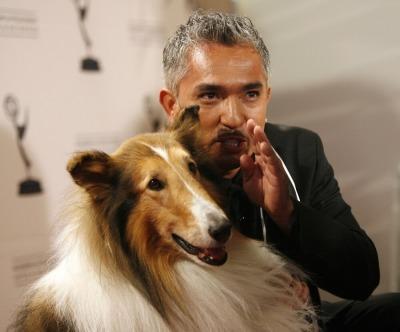 Cesar Millan, Lassie