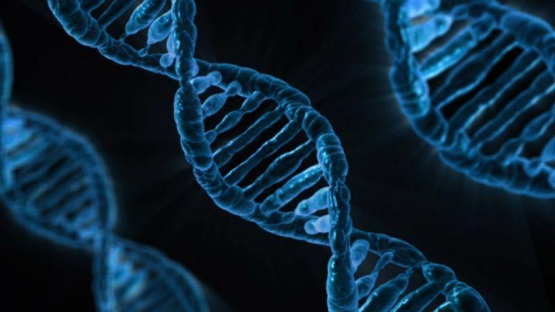 Hit pause on gene editing